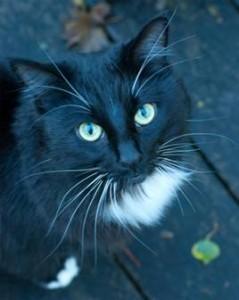 Found cat November 2013