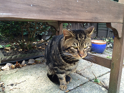 stray tabby 2 March 25 2014